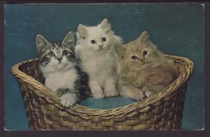 Three Kittens in a Basket Postcard BIN