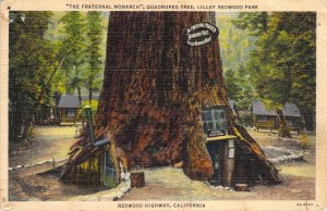 The Fraternal Monarch Lilley Redwood Park Redwood Highway California Postcard