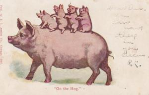 Pigs Humour On The Hog 1906