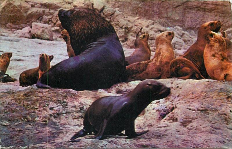 Argentina Patagonia fauna Peninsula Valdes Lobos marinos seals