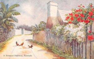 Bermuda Somerset Highway Scenic View CF Tucker Vintage Postcard AA14743