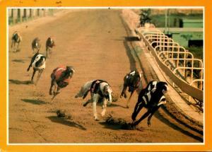 Florida Miami Greyhound Racing 1988