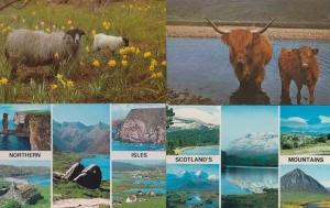 Sheep in Scottish Mountains 4x 1970s Postcard