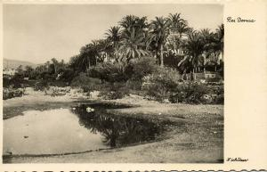 libya, DERNA DARNAH, Scene with Palm Trees (1940s) H. Schlösser Photo