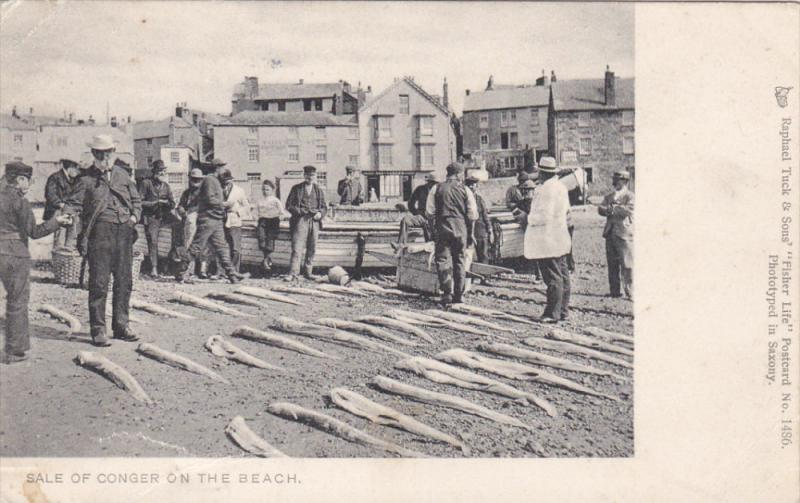 Sale of Conger [fish][ on beach , UK , PU-1903 TUCK