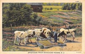 Rancocas Woods New Jersey~Farmer With Cattle at Water Pump~1944 Linen Postcard