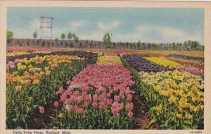 Michigan Holland Nelis Tulip Farm 1966 Curteich
