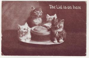 P306 JL postcard 1910 4 kittens hat the lid is on here
