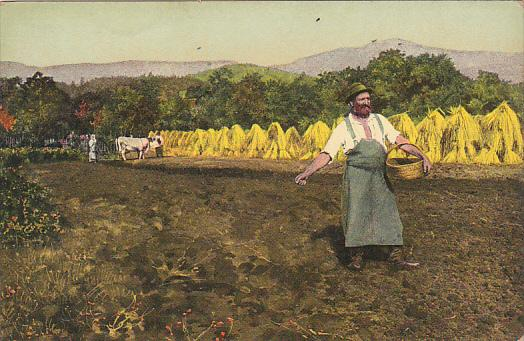 Harvest Scene Hay Making Sowing Seeds
