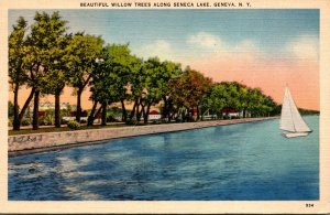 New York Geneva Beautiful Willow Trees Along Seneca Lake 1944