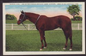 Burgoo King,Kentucky Derby Winner Postcard