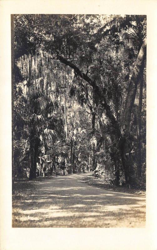FLORIDA, SCENE FROM HIGHLANDS HAMMOCK STATE PARK RPPC REAL PHOTO POSTCARD