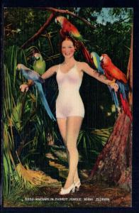 Macaws in Parrot Jungle,Miami,FL
