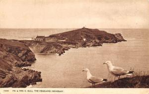 Newquay, The Headland, Mr. & Mrs. Gull, Greetings, Best Wishes!