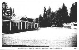 California Santa Cruz Sequoia Gardens General View