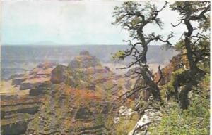 US Used post card - Grand Canyon, Arizona from Cape Royal