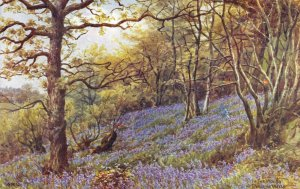 Vintage Kent Art Postcard, In the Woods Nr Tunbridge Wells by A.R Quinton DP4