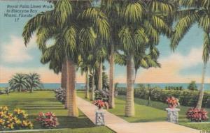 Florida Miami Royal Palm Lined Walk To Biscayne Bay 1947