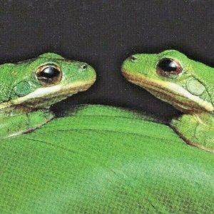 Green Tree Frogs 1996 Louisiana Atchafalaya Basin Swamp National Audubon Society