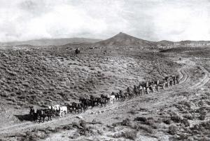 Postcard Long Stagecoach travelling toward the Mines, Goldfield, Nevada, USA 64C