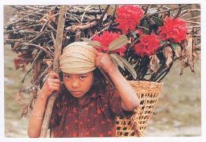 Thakali Girl carrying Rhodedendron flowers, NEPAL, PU-1988
