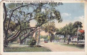 Florida Daytona Old Witch Trees Magnolia Avenue 1925