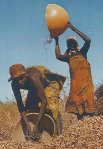 Nigeria Groundhut Harvest Festival Postcard