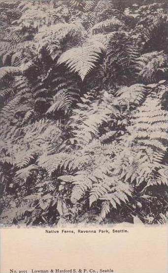 Washington Seattle Native Ferns Ravenna Park