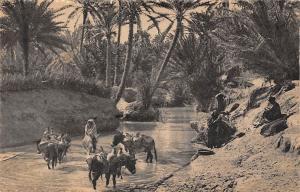 Morocco Scenes et Types - Un Oued dans l'Oasis 1949