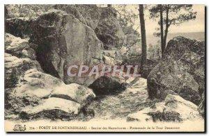 Postcard Old Forest of Fontainebleau Trail mastodons Tower Promenade Denecourt