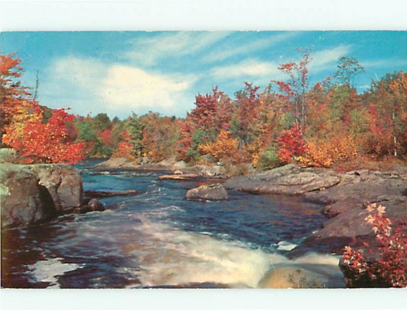 Cobalt Ontario Canada Forest Fall Sream River  Postcard # 5760