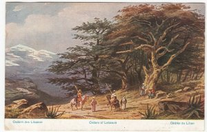 Holy Land; Cedars Of Lebanon, Artist Signed F Perlbera PPC, Unposted, c 1910's
