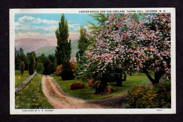 NH Carter Notch Poplar Trees Thorn Hill Jackson New Hampshire Postcard PC