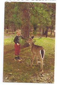 Boy Deer Doe Eagles Mere PA