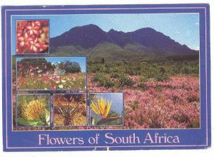 5-Views, Flowers of South Africa, Flora, PU