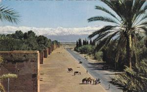 Lesremparts et le Grand Atlas, Marraech, Morocco, 40-60s