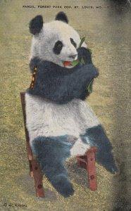 Panda Bear , Forest Park Zoo , ST. LOUIS , Missouri , 1930-40s