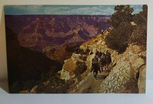 Vintage Postcard Mule Train Bright Angel Trail Grand Canyon Arizona cowboy