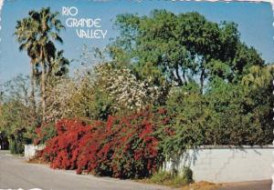 Rio Grande Valley Mcallen Texas 1978