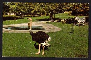 NY – Buffalo Zoological Gardens - African Veldt