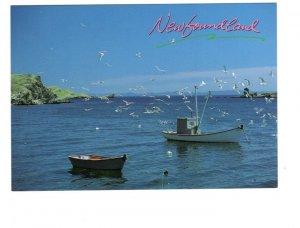 Fishing Boats, Seagulls, Newfoundland, Large 5 X 7 Postcard