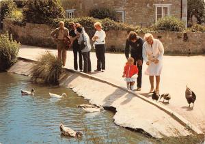 Whitecliff Bay Duck Pond Isle of Wight Birds