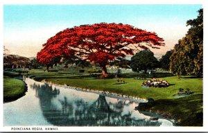 Hawaii Poinciana Tree In Full Bloom