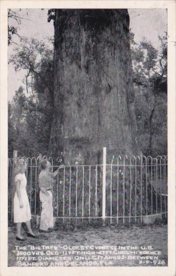 Florida Orlando Longwood The Big Tree Oldest Cypress In The U S  Real Photo