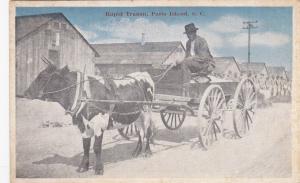 Black man driving Ox Cart , PARRIS ISLAND , South Carolina , 1910s