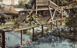 LPA55 Hot Springs  Arkansas Postcard Alligator Farm