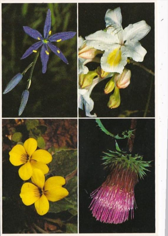 Anderon's Thistle Mountain Violet Western Azalea Camas Lily Flowers Of The Si...