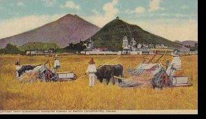 International Harvester Company 1909 Harvest Scenes Around The World Mexico