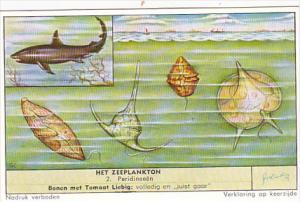 Liebig Trade Card S1674 Marine Plankton No 2 Peridineen