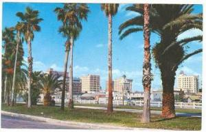 Palm tree drive with skyscapers of Tampa, Florida,40-60s